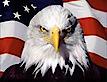A All American Service's Company logo
