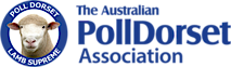 Australian Poll Dorset Association's Company logo