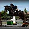 Autumn Charm Sport Horses's Company logo