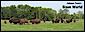 Bison World's company profile