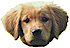 Bookpuppy Educational Resources Logo