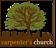 Carpenter's Church Logo