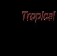 Casual Tropical Wear's Company logo
