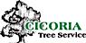 Cicoria Tree Logo