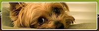 Critters 4 U Rescue's Company logo