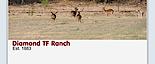 Diamond Tf Hunting Ranch's Company logo
