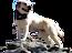 Baci Italian Grill's Competitor - Doggie Hikes logo