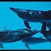 Dolphins Down Under Llc*'s Company logo