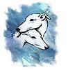 Donna D'amico & Greytdogs Agility's Company logo