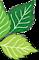 Tri County Landscape Supply's Competitor - Dooling Landscape Service logo