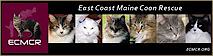East Coast Maine Coon Rescue (Ecmcr)'s Company logo