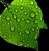 Easycaregardening's Company logo