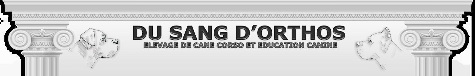 Elevage Familial De Cane Corso Du Sang Dorthos Competitors