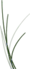 Grass Roots Software's Company logo