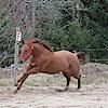 Horselogs.com, Easy Online Horse Software's Company logo
