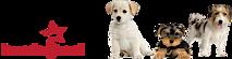 Hundsajten's Company logo