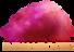 Sarkari Result's Competitor - Indianroots logo