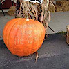 Land Of The Giants Pumpkin Farm's Company logo