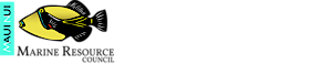 Mnmrc's Company logo