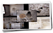 Mold Inspection Providence Logo