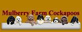 Mulberry Farm Kennel's Company logo