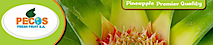 Pecos Fresh Fruit's Company logo