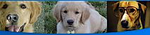 Pets First Animal Clinic's Company logo