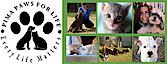 Pima Paws For Life's Company logo