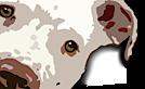 Pit Bull Rescue San Diego's Company logo