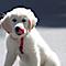 Funny Fur's Competitor - Random Dog Street Photography logo