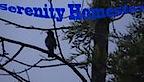 Serenity Homestay's Company logo