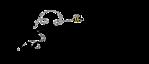 Sierra Rach Photography's Company logo