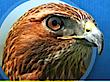 Stillwater Elementary School's Company logo