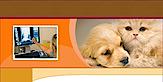 Teaneck Animal Clinic And Spa's Company logo