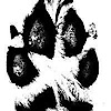 The Ohio Pet Sanctuary's Company logo