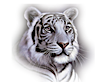 Tiger Insurance Agency's Company logo