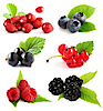 Types Of Berries's Company logo