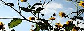 Vein Of Sunflowers's Company logo