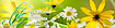 Traditionalflowers Logo