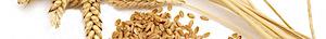 Wheat Works's Company logo