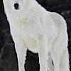 Whitewolfpack's Company logo