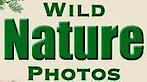 WildNaturePhotos's Company logo