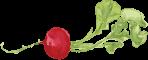 Wilson Gardens's Company logo