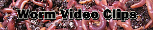 Worm Video Clips's Company logo
