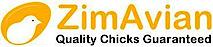 Zimavian's Company logo
